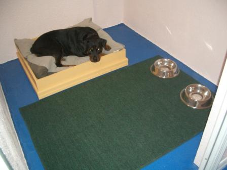 ... day of playing and having fun, each dog gets their own private suite
