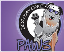 Dog Daycare, Dog Grooming and Pet Suites