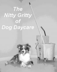 The Nitty Gritty of Dog Daycare